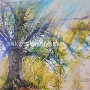 Malerei-Baum-Licht-Hügel