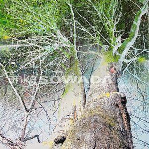 Platanenspitzen-Malerei-Bäume