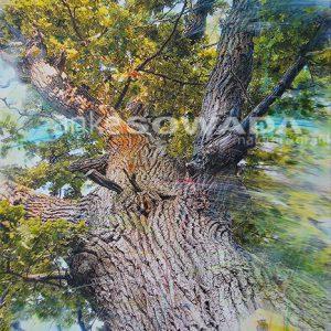 Baum-gemalt-Naturdenkmal