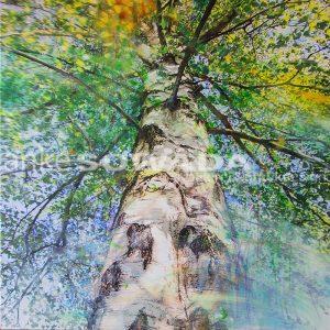 Malerei-Baum-Birke