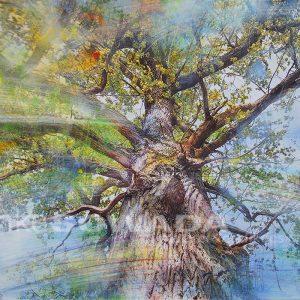 Malerei-Baum-Eiche