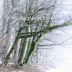 Bild-Waldweg-Bäume-mit-Schnee