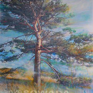 Malerei-Baum-Kiefer-Heather-Hills